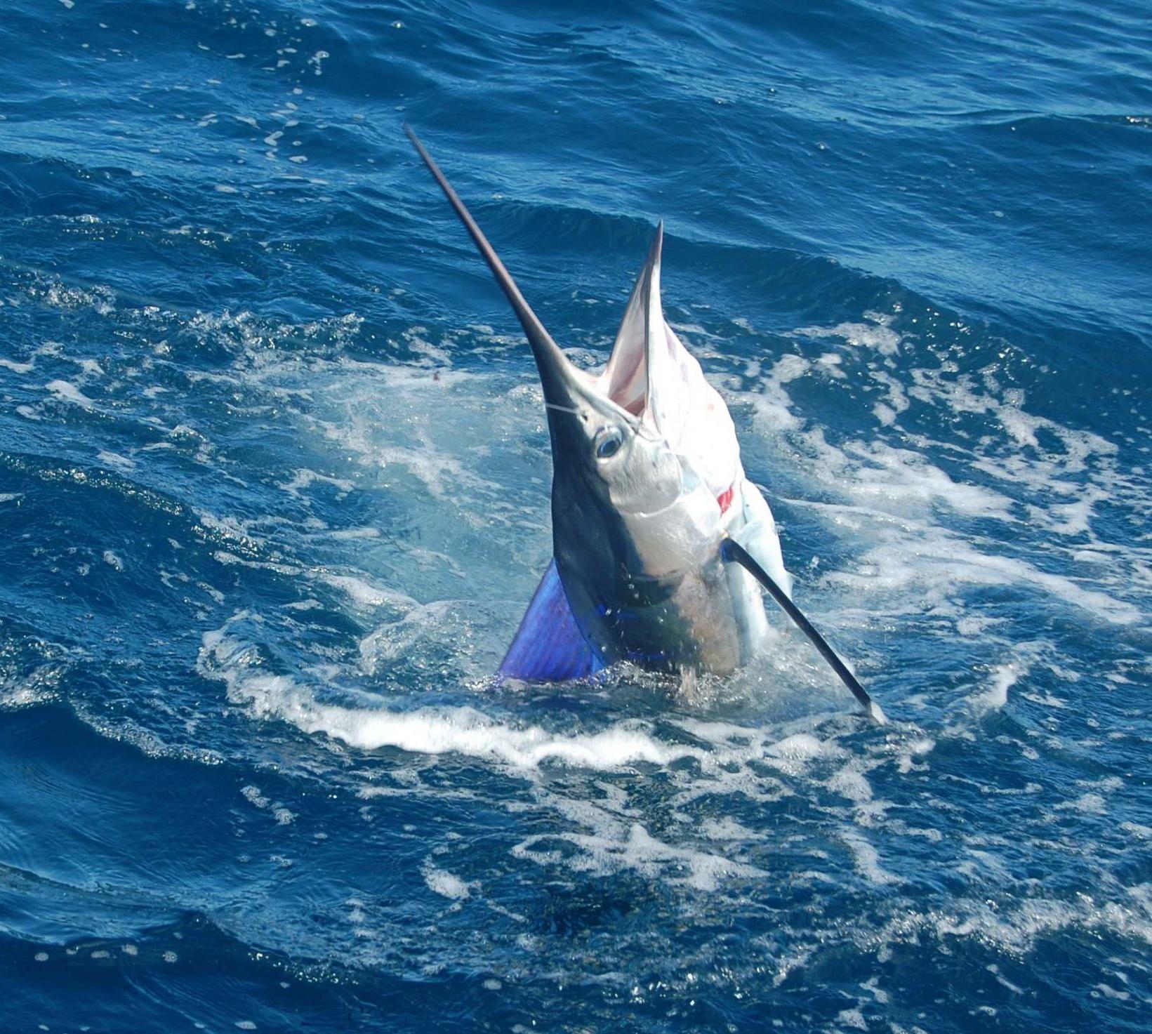 fishpix2014060
